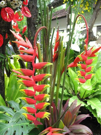 Red Strelitzia Flowers photo