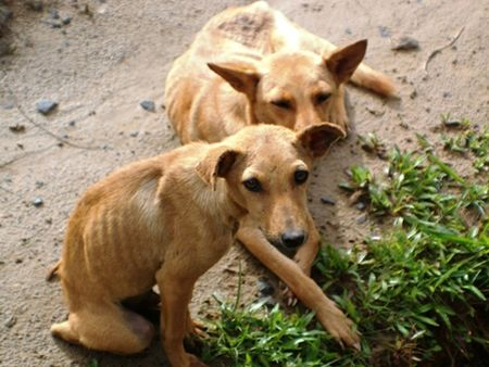 pity: Pity Hungry Dogs