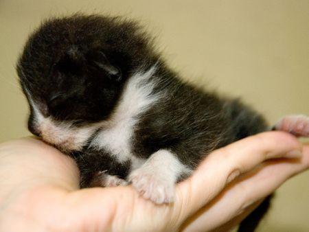 Small Cute Kitten on Hand Stock Photo - 5174968
