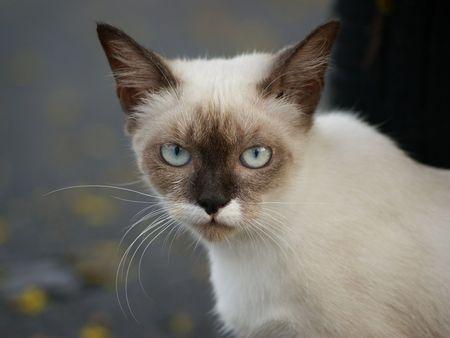 Home Pet - Cat Stock Photo - 5211222