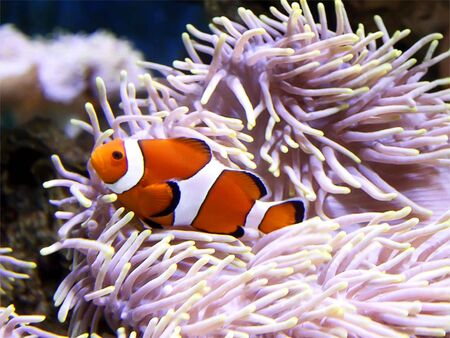 marinelife: Memo Fish in the Big Aquarium
