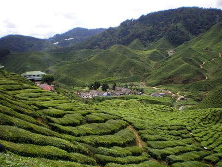 Tea Village