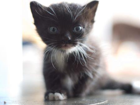 Cute Little Kitten Stock Photo - 5188458