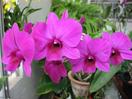 purple orchid: Home Purple Orchid Flowers