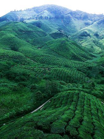The Tea World Stock Photo