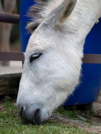 Cara burro Foto de archivo - 5211653