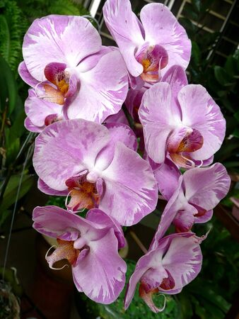 purple orchid: Nicely Purple Orchid