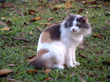 Home Cat Stock Photo - 5246839