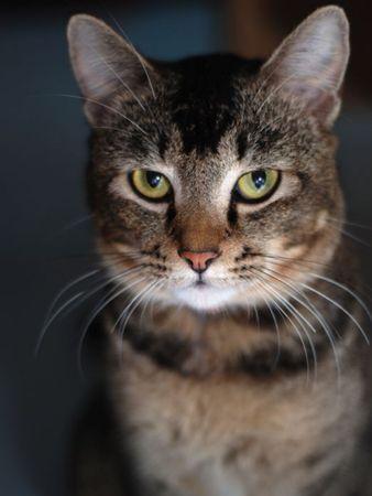 Serious Look Cat Stock Photo - 5246753