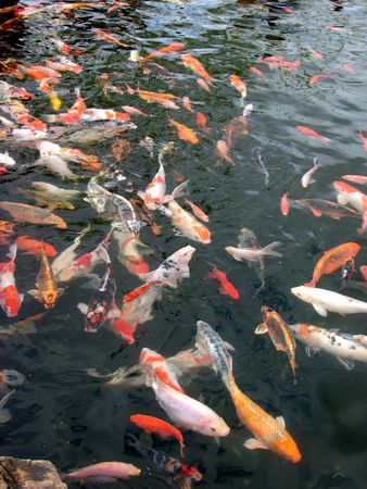 marinelife: The Fish Pond Stock Photo