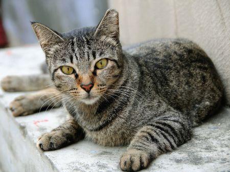 Cat Stock Photo - 6753050