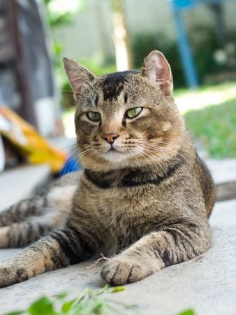 Fatty Cat Stock Photo - 6807579