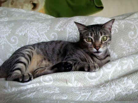 Hi Cat Stock Photo - 7145375
