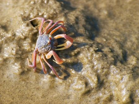 marinelife: Sea Crab