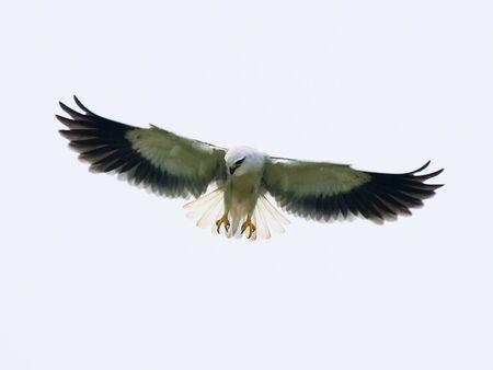 Flying Eager