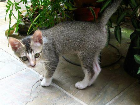 Little Cat Stock Photo - 7145396
