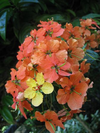 compositae: Orange Color Compositae Flowers