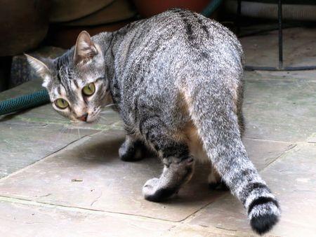 Wild Cat Stock Photo - 7529971
