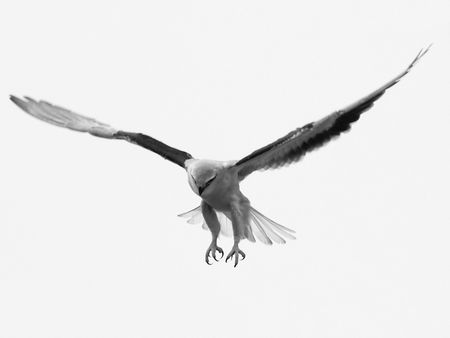 Flying Eagle Hunt For Animal Stock Photo - 7529760