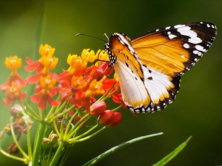 カラフルな蝶 写真素材