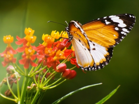 yellow flower: Colorful Butterfly Stock Photo