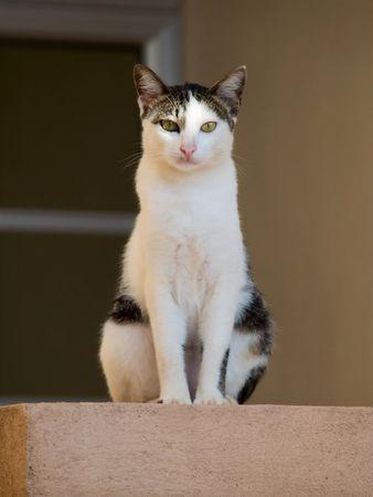 Cat Guard Stock Photo - 7854260