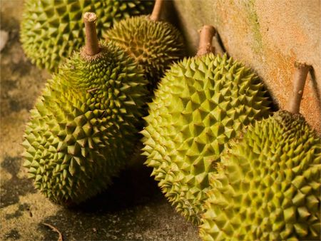 Durian for Life Stock Photo - 7854261