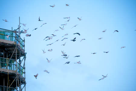 roosting: Doves in Flight Stock Photo
