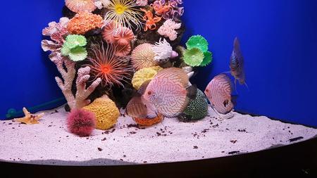 Aquarium with marine life, fish and corals Standard-Bild