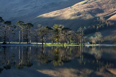Buttermere pines Stock Photo - 16898276