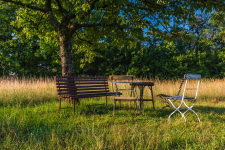 bench chairs and a tree