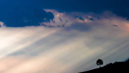 A silhouette of a tree with sunbeams and a blue background Banco de Imagens