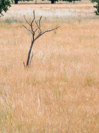 The small bald tree on the heath Stock Photo