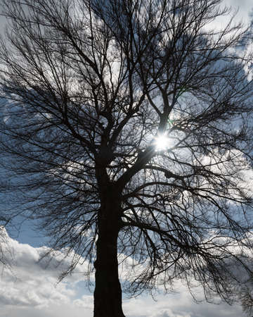 Silhouette of a single large tree with a blue sky