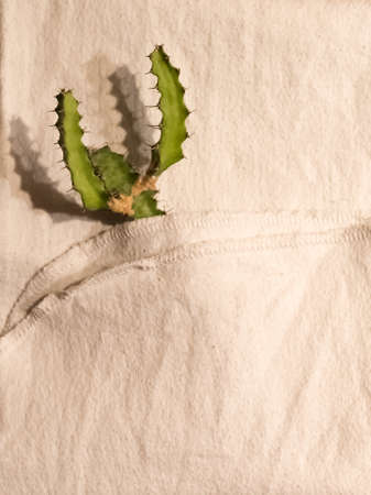 Small green prickly cactus in a white towel