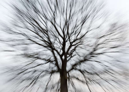 Silhouette of a bare tree with a round treetop in motion blur 写真素材