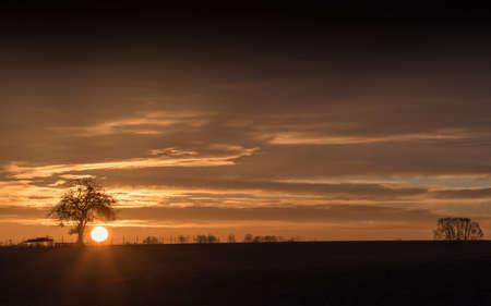 The sun is behind a silhouette of a bare tree in the country