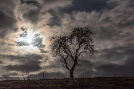 Bare tree on a hill with sun behind the clouds 写真素材
