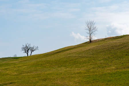 Bare trees on a hill with a green meadow 写真素材