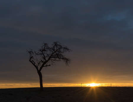 A bare tree with beautiful sunrise under a cloudy sky