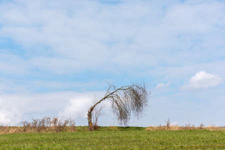 Bare cracked tree on a green meadow 写真素材