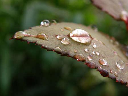 Drop on leaf photo
