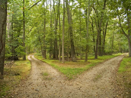 park path: This is a shot of two hiking trails at Allaire State Park in New Jersey.