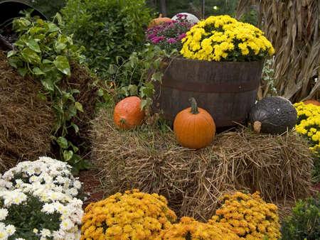 Dies ist ein schönes Display von Kürbis für Halloween und Mütter  Standard-Bild