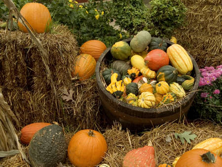gourds: This is a Halloween composition of pumpkins and gourds. Stock Photo