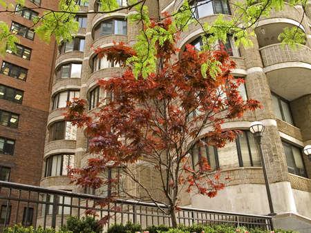 Einige nette Bäume wachsen aus Seite eine hohe Aufstieg Wohnanlage in Manhattan.