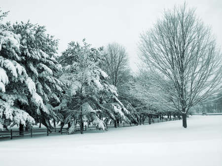 duotone: This is a greenish blue duo-tone shot of a park covered in fresh snow.