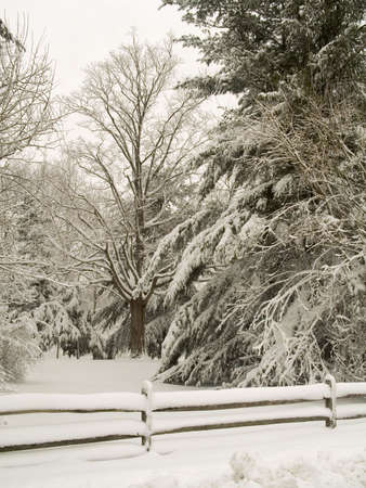 blanketed: This is a shot of some trees and a fence blanketed  in snow.