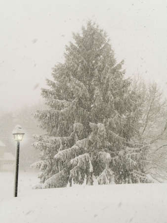 midst: This is a shot of a glowing lamp and a pine tree in the midst of a big snowstorm.