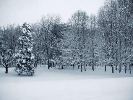 Dieses ist ein blaues Duo-getontes Foto eines Waldes, der im frischen Schnee bedeckt wird. Standard-Bild